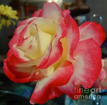 Lovely Rose by Jenny Lee