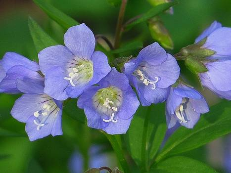 Lovely Spring Blues by Lori Frisch