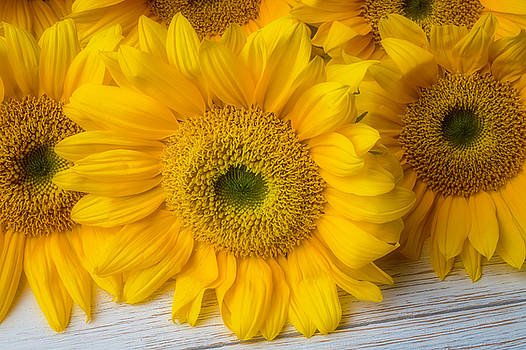 Lovely Sunflower Still Life by Garry Gay