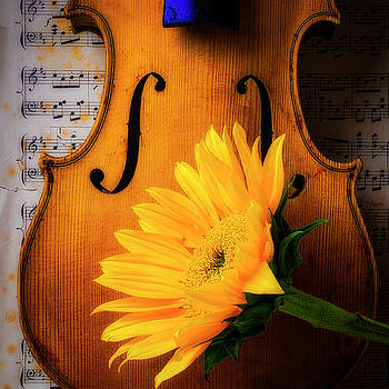 Lovely Sunflower With Old Violin by Garry Gay