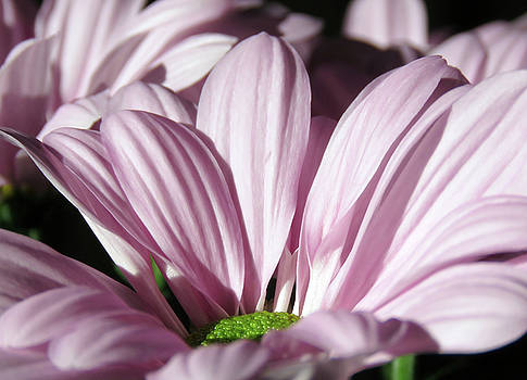 Lovely Sunlight On The Flowers by Johanna Hurmerinta