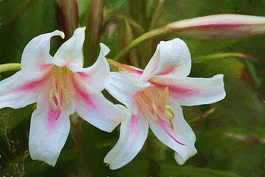 Lovely Trumpet Lilies  by Kathy Clark