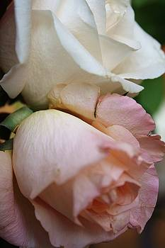 Lovers' Roses by Angelina G T