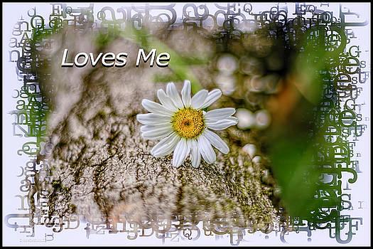 LeeAnn McLaneGoetz McLaneGoetzStudioLLCcom - Loves Me Daisy