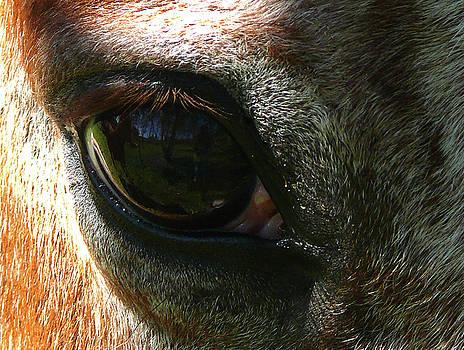 Loving Eye by Evelyn Tambour