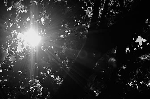 Marla McPherson - Loving Light In Black and White