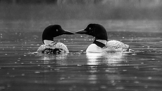Loving Loons by Darryl Hendricks
