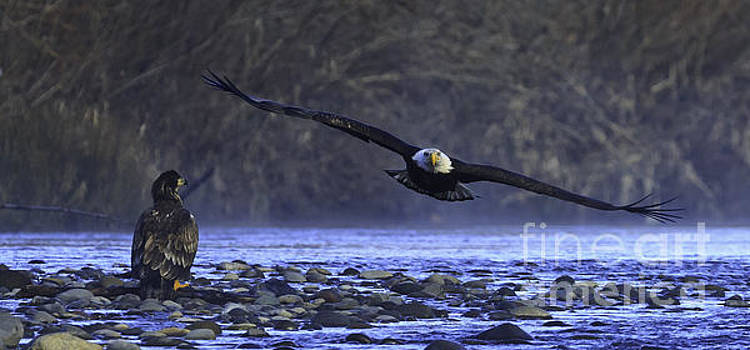 Low altitude fly-by by Tim Hauf