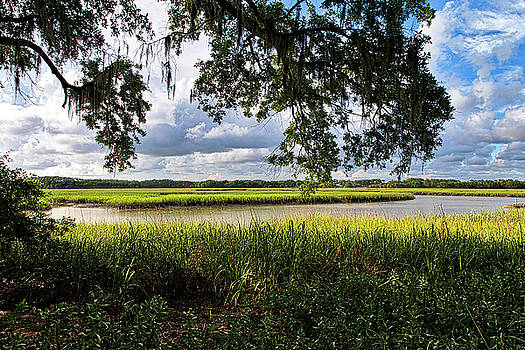 Janet Fikar - Low Country 3