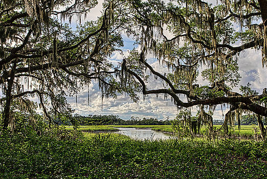 Janet Fikar - Low Country 4
