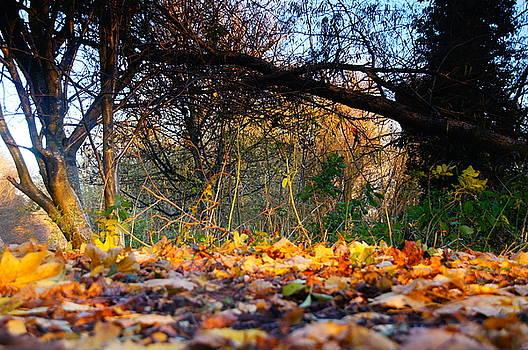 Low-Level Leaves by Nik Watt