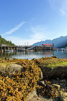 Low Tide at Horseshoe Bay Canada on a Sunny Day by David Gn