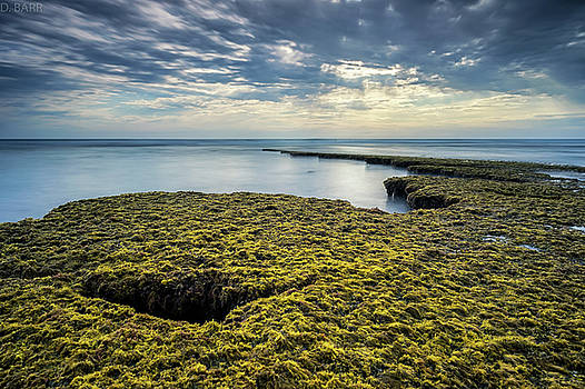 Low Tide at Swami's by Doug Barr