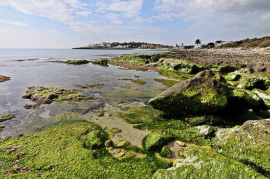 Pedro Cardona Llambias - Low tide in green