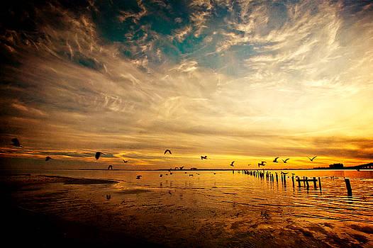 Low Tide Sunset Flight by Joan McCool