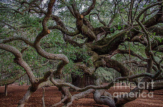 Dale Powell - Lowcountry Angel Oak Tree