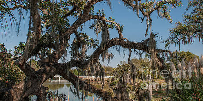 Lowcountry Tapestry by Dale Powell