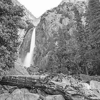 Michael Tidwell - Lower Yosemite Falls in Black and White by Michael Tidwell