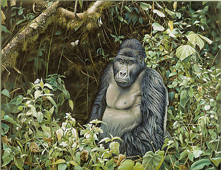 Lowland Gorilla -Zaire by Eric Wilson
