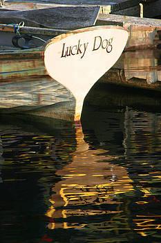 Lucky Dog by Melvin Kearney