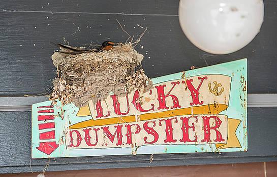 Lucky Dumpster Bird Nest by Doug LaRue