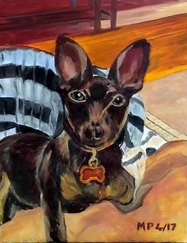 Lucky the dog by Madeleine Prochazka