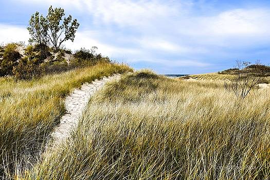 Ludington State Park Dunes by Dick Bourgault