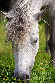 Angela Doelling AD DESIGN Photo and PhotoArt - Lulu the Welsh Pony