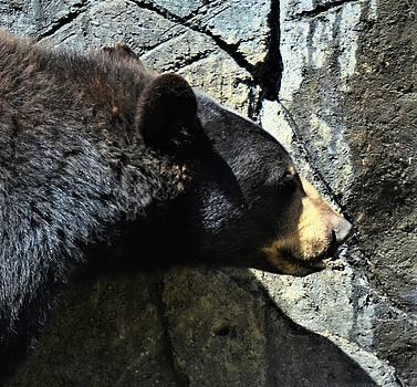 Lumbering Bear by CK Brown