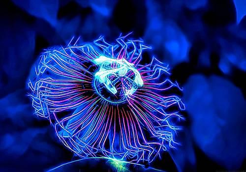 Lumine-Scent by Chrystyne Novack