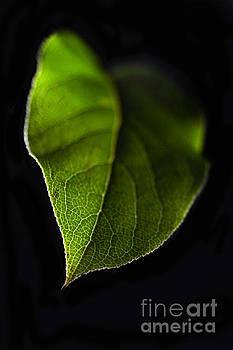 Luminous Leaf by Dan Holm