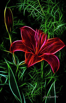 Joann Copeland-Paul - Luminous Lily