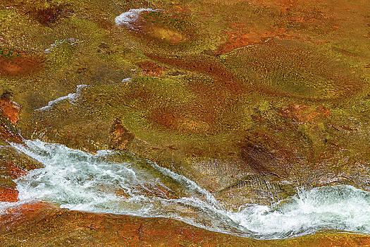 Luminous Oak Creek Abstract by Bonnie Follett