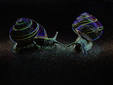 Luminous Snails by Celena Sandaker
