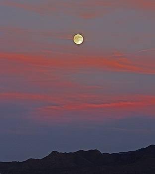 Luna by Deanne  Chapman