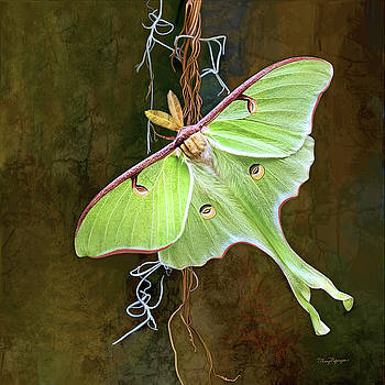 Luna Moth by Thanh Thuy Nguyen