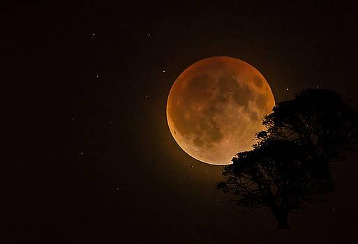 Lunar Eclipse by Greg Grupenhof