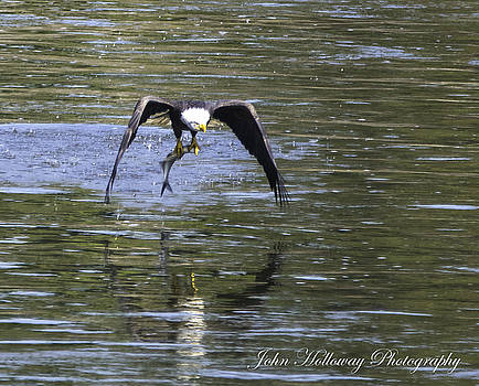 Lunch on the fly by John Holloway