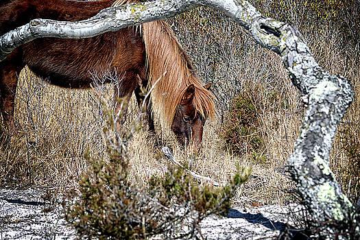 Lunchtime for Gokey Go-Go Bones by Assateague Pony Photography