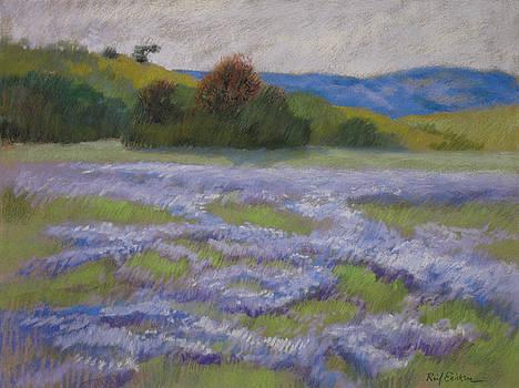 Lupin Field by Reif Erickson