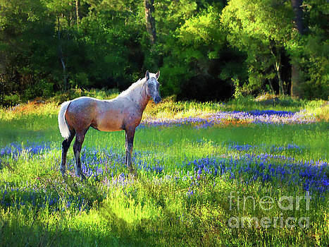 Lupine Delight by Melinda Hughes-Berland