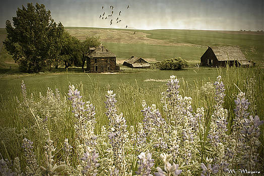 Lupine Homestead by Melisa Meyers
