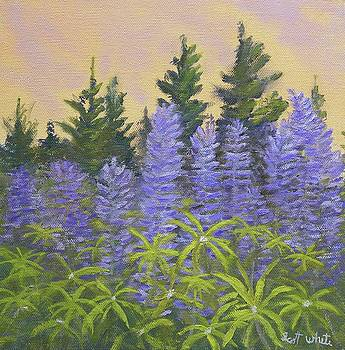 Lupine In The Morning by Scott W White