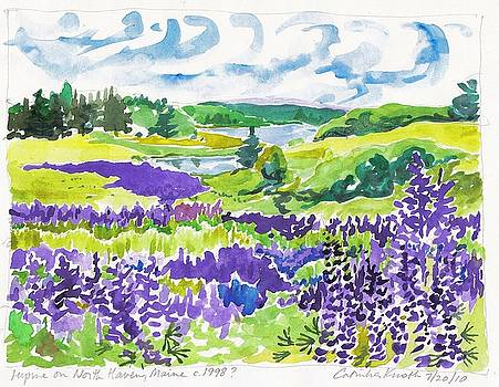 Lupine on North Haven Maine  by Catinka Knoth