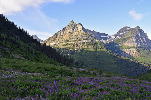 Lupines and Towering Mountain Peaks by Bruce Gourley
