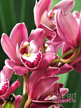 Luscious Orchids by Anita Adams