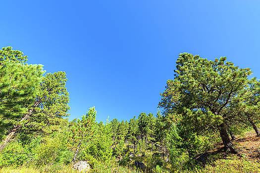 Lush Green Forest by Jess Kraft