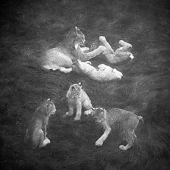 Lynx in the Mist bw by Tim Newton