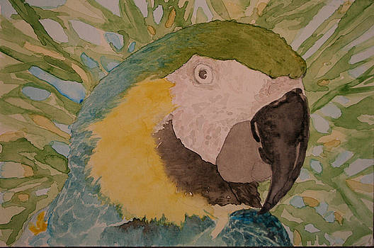 Macaw - WIP by Theresa Higby