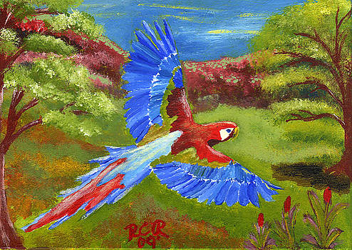 Macaw In Flight by Renee Cain-Rojo
